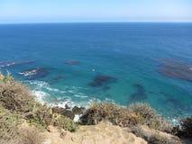 Kelp de flutuação Fotografia de Stock Royalty Free