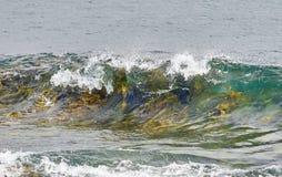 Kelp in de kam van de golf wordt gevangen die royalty-vrije stock afbeelding