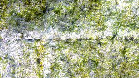 Kelp green background Royalty Free Stock Image