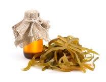 Kelp ( laminaria ) iwith pharmaceutical bottle. Stock Images