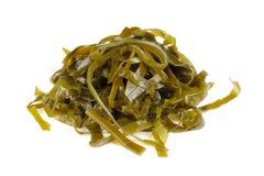 Kelp (Laminaria) Seaweed Isolated on White Background Stock Photos