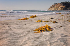 Kelp op Strand, Del Mar California Royalty-vrije Stock Foto's