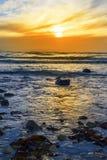 Kelp przy skalistą beal plażą Obraz Royalty Free