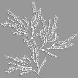 Kelp sea weed 3d with realistic shadow. On gray background Stock Photo