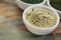 Kelp seaweed powder Royalty Free Stock Image