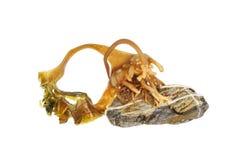 Kelp and stone Stock Photo
