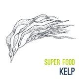 kelp Supergezeichneter Skizzenvektor des Lebensmittels Hand stock abbildung