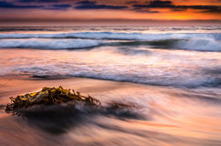 Kelp vs Ocean. Was shot at La Jolla Shores near San Diego, CA.  I used a long exposure to smooth out the waves Stock Photo