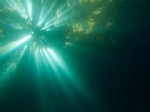 kelp światło słoneczne Obrazy Stock