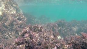 Kelpmeeresgrund stock video footage