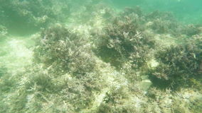 Kelpmeeresgrund stock video
