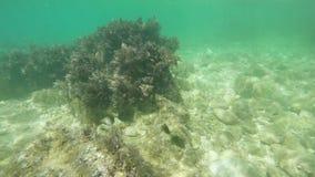Kelpmeeresgrund stock footage