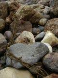 Kelpmeerespflanzenwicklung um Strand schaukelt auf Küste stockbilder