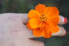 The kelsang flower. My friend reached up it,and think it's cool,so I take it Stock Image