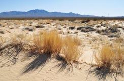 Kelso dyn, nationell sylt för Mojave royaltyfri bild