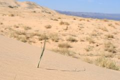 Kelso Sand Dunes, Mojave Desert, California Stock Photography