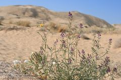 Kelso Sand dunes, Mojave Desert, California Stock Photo