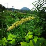 Kelud Mountain. Weather at kelud mountain is rainy stock photography