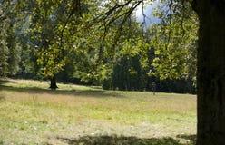 Kelvingrove Parkuje, Glasgow, Szkocja, Zjednoczone Kr?lestwo, Wrzesie? 2013, parkland i drzewa w Kelvingrove parku, zdjęcie royalty free