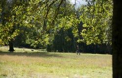 Kelvingrove Parkuje, Glasgow, Szkocja, Zjednoczone Kr?lestwo, Wrzesie? 2013, parkland i drzewa w Kelvingrove parku, zdjęcia royalty free