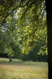 Kelvingrove Parkuje, Glasgow, Szkocja, Zjednoczone Kr?lestwo, Wrzesie? 2013, parkland i drzewa w Kelvingrove parku, zdjęcie stock