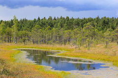 Kemeri国家公园 免版税图库摄影