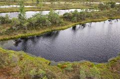 Kemeri沼泽在拉脱维亚 库存照片