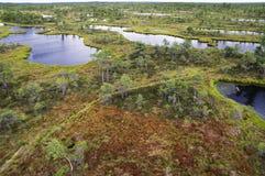 Kemeri沼泽在拉脱维亚 免版税库存图片