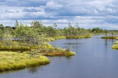 Kemeri沼泽在拉脱维亚 图库摄影