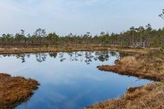 Kemeri überflutet Nationalpark Lizenzfreies Stockbild
