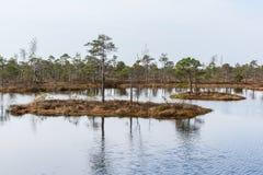 Kemeri inonde le parc national photos libres de droits