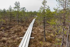 Kemeri inonde le parc national images libres de droits