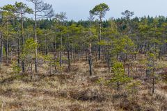 Kemeri inonde le parc national image stock