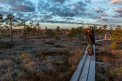 Kemeri. Latvia. Photographer photographs the sunrise in the Kemeri bog in the cold autumn morning. Kemeri. Latvia. Photographer photographs the sunrise in the royalty free stock photos