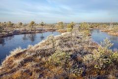 Kemeri nationaal park stock fotografie