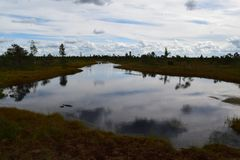 Kemeri national park, bog and lakes landscape picture with trees refelcting in the water.  stock photos