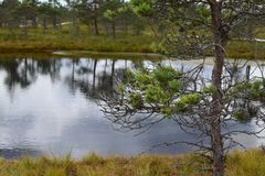 Kemeri national park, bog and lakes landscape picture with trees refelcting in the water.  royalty free stock image