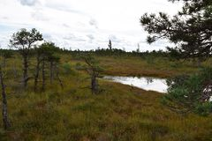 Kemeri national park, bog and lakes landscape picture with trees refelcting in the water.  stock photo