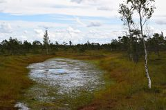 Kemeri national park, bog and lakes landscape picture with trees refelcting in the water.  royalty free stock photography