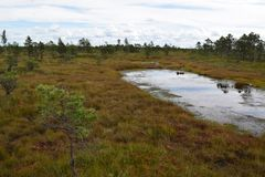 Kemeri national park, bog and lakes landscape picture with trees refelcting in the water.  royalty free stock photos