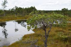 Kemeri national park, bog and lakes landscape picture with trees refelcting in the water.  royalty free stock images