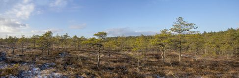 Kemeri national park Latvia in winter sunny day panorama. royalty free stock image