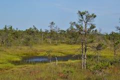 Kemeri-Sumpf Stockbilder