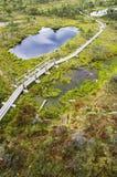 Kemeri-Sumpf in Lettland lizenzfreie stockbilder