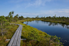 Kemeri Swamp. A beautiful evening in Kemeri sawmp Royalty Free Stock Photo