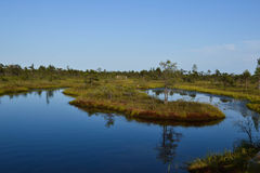 Kemeri Swamp Royalty Free Stock Photos