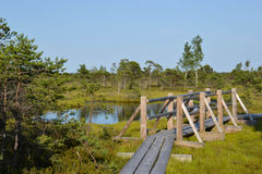 Kemeri Swamp. A beautiful evening in Kemeri sawmp Stock Image