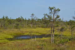 Kemeri Swamp Stock Images