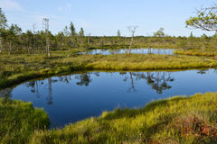 Kemeri Swamp. A beautiful evening in Kemeri sawmp Stock Photos