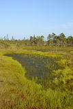 Kemeri Swamp. A beautiful evening in Kemeri sawmp Stock Photo